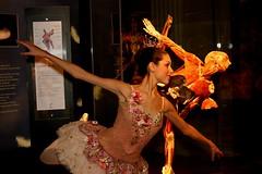 Beautiful and Bizarre bw2 (Darryl W. Moran Photography) Tags: philadelphia beautiful ballerina philly franklininstitute plastination gunthervonhagens bodyworlds2 nutcrackerfairy plastinatedfairy