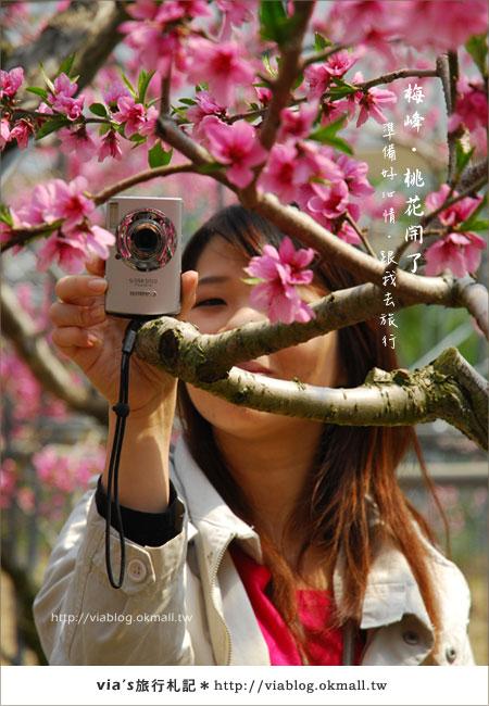 【梅峰農場桃花緣】最美的桃花隧道,就在南投梅峰這裡~(上)24