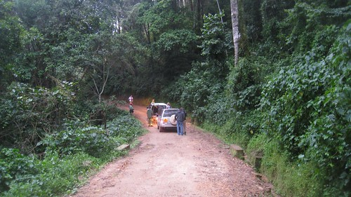Starting point for our hike in Nyungwe Forest