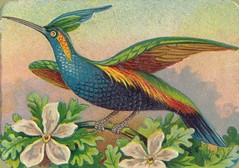 oiseauchromos 2