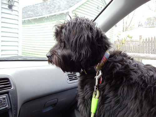 The Before…….. | Stella!!! A Blog About A Schnoodle!!