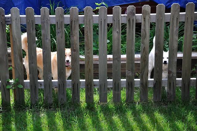 Neighbor pups