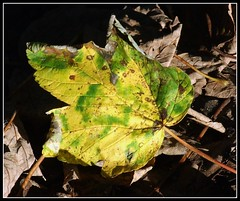 Lone leaf (philwirks) Tags: abstract public decay picnik myfavs prismatic philrichards beautifuldecay show08 philwirks