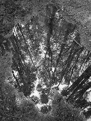 PB010329 (James Sayer) Tags: argentina tierradelfuego ushuaia escher
