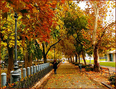 Budapest in autumn bloom (jackfre2 (on a trip-voyage-reis-reise)) Tags: park street city trees red brown green leaves square ginger budapest perspective poles benches breathtaking hungaria ter szabadsag breathtakinggoldaward breathtakinghalloffame