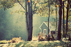 a house on a hill (slight clutter) Tags: morning trees light sunlight house forest woods newengland newhampshire foliage sunlit optimism raysoflight