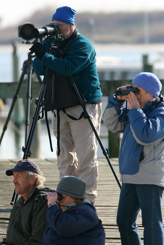 Ivory Gull watchers 20091208
