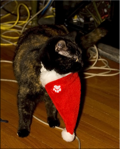 Bella Christmas