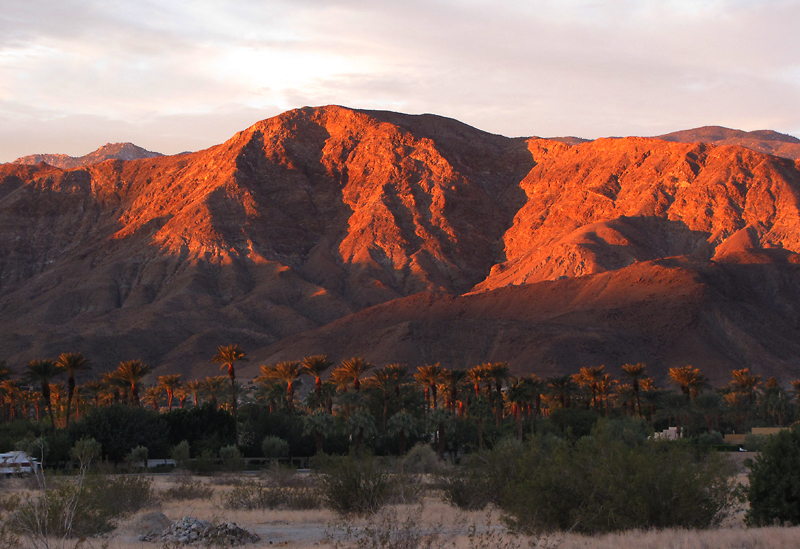 Palm Springs Sunrise (mountain over palms)