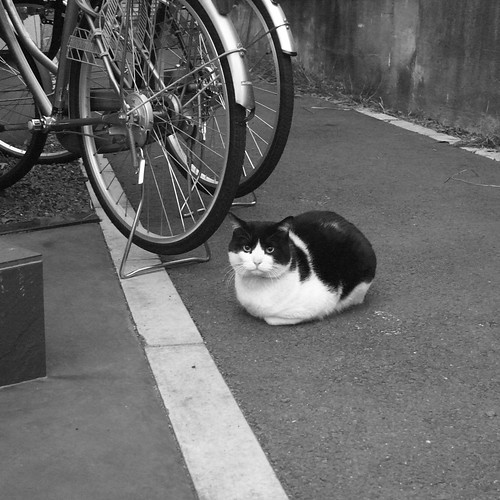 Today's Cat@2010-01-07