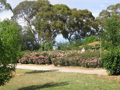 'The Heritage' garden