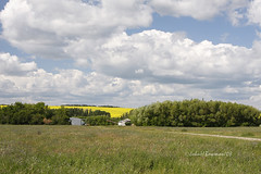 Clouds & Canola - More of the Canadian Prairie 2 (John H Bowman) Tags: canada july explore saskatchewan 2008 prairiesky canon24105l canolafields