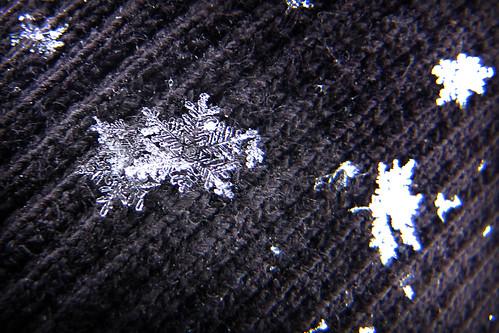 snoflakes 079x