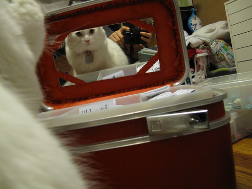 Nilla in the mirror.