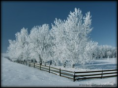 One Sunny Day in Winter (westrock-bob) Tags: county wood blue winter sky snow canada beauty fence wonder one amazing frost day board tracks bob radiation sunny ab canadian glorious trail alberta stunning winters allrightsreserved westrock acreage canadien 2010 hoar cuthill kneehill westrockbob bobcuthillphotographygmailcom updatecollection
