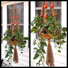 Orangeberries (Macramaking- Natural Macrame Plant Hangers) Tags: orange plants mountains tree beauty vintage idea beads spring pretty basket natural bright handmade unique decorative character cottage creative northcarolina funky gift porch shelby 70s hanging chic birthdaygift weavers groovy weddinggift knots sunroom beachhouse christmasgift hangingbasket shabby artscrafts jute containergardening macram planthanger alternating mothersdaygifts macramakin macramaking 5plyjute