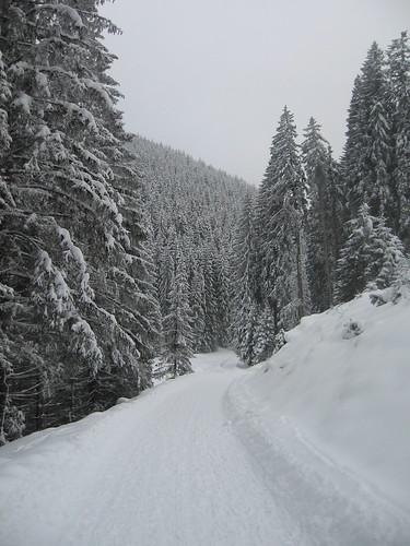 Forstweg im Winter