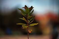 "Piantina a ""LE VELE"" (Andrëa Sënsi) Tags: new plant flower digital canon photo strada andrea no andreas best millennium le mk2 5d foglia fiore hdr eso markii pianta sfondo sensi sfocato vele piantina andysen74"