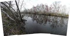 swamp 9 (aranreo) Tags: island scout tkf karankawa