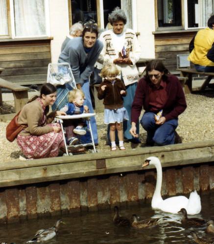 Feeding swans 008