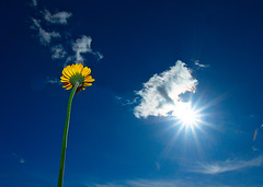 Spring! (photon tamer) Tags: blue sky sun white flower nature yellow clouds interestingness spring explore strobe explored strobist tamronaf1750mmf28xrdiiildasphericalif sonyalpha700 sonydslra700 sonyhvlf42am 1galleries