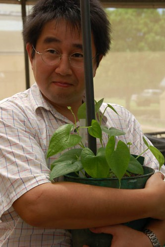 outsourcing projects for tissue culture raised or in vitro propagated planting materials