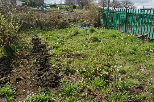 Marley Hill allotment Apr 11 3