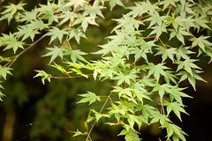 IMG_0271 (Martin Buitron Photography) Tags: leaves animals zoo washingtondc toucan panda frog nationalzoo