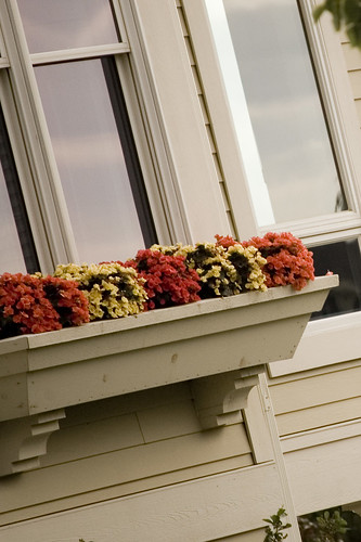 Window Boxes by mylla7777