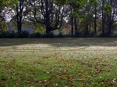 Goffertpark, Nijmegen (by_irma) Tags: autumn trees holland grass nijmegen drops bomen circles herfst nederland gras leafs gelderland druppels bladeren cirkels goffertpark