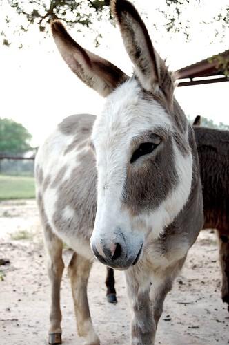 donkey_profile