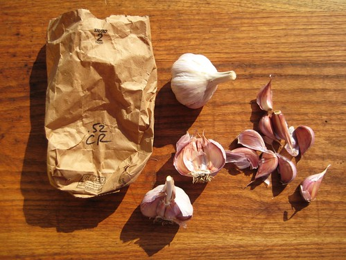 garlic planting tomorrow