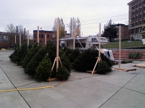 Go HyperLocal and Buy Your Tree at Tollefson Plaza!   Tacoma ...