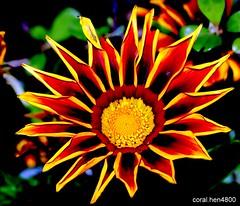 fantastic flower (coral.hen4800) Tags: flowers sky sun green rain yellow parks vosplusbellesphotos