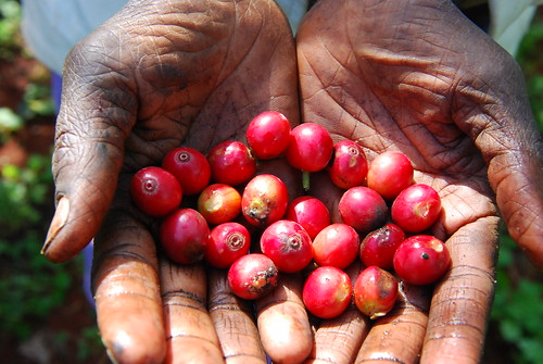 Kenya_09_DSC_0441-1
