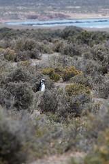 baudchon-baluchon-pinguins-2