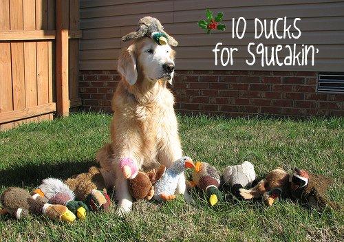 ten ducks for squeakin'
