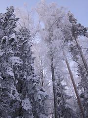 winter 667