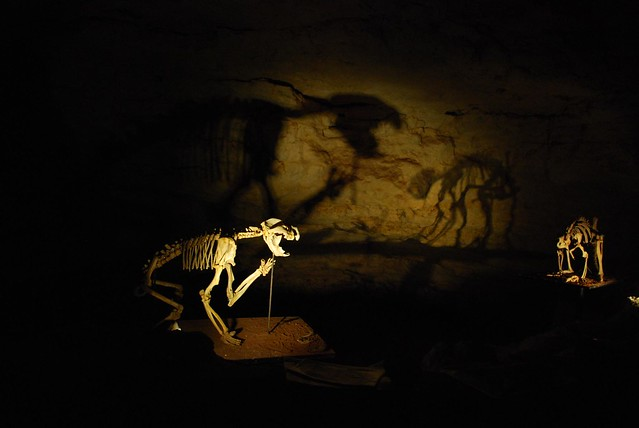 Thylacoleo fossil + shadow - Victoria Fossil Cave