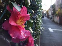 Tokyo 2009 - 中野 - 散步隨手拍(3)