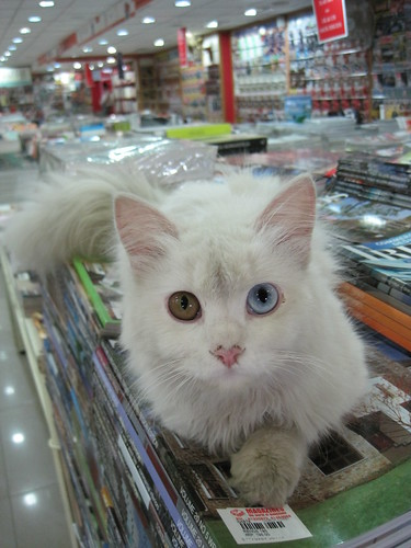 cute white bookstore cat kitten pic