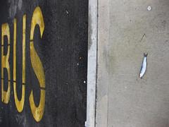 Pesce azzurro e via (1) (bellimarco) Tags: road street fish bus dead strada dada decadence morto pesce merluzzo decadenza