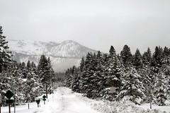 Snow Storm # 3