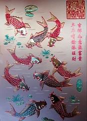 5-47-2february2010 248 рыбки