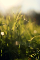 my grass likes bokeh (denesiachristine) Tags: sunlight grass dof bokeh flare 365 blizzard nosnow sunglare not layinginthegrass notblizzard