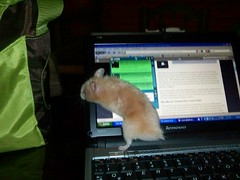 kdk_1005 (@rriostrujillo) Tags: hamsters