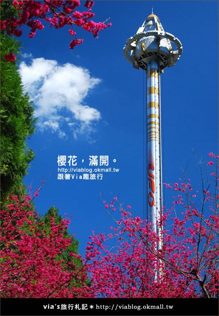 【九族櫻花季】櫻花滿開!最浪漫的九族文化村櫻花季12