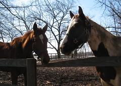 A couple more horses