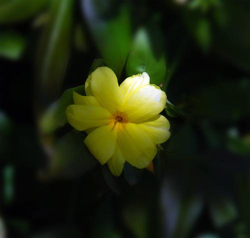 Shady-Spring-Flower