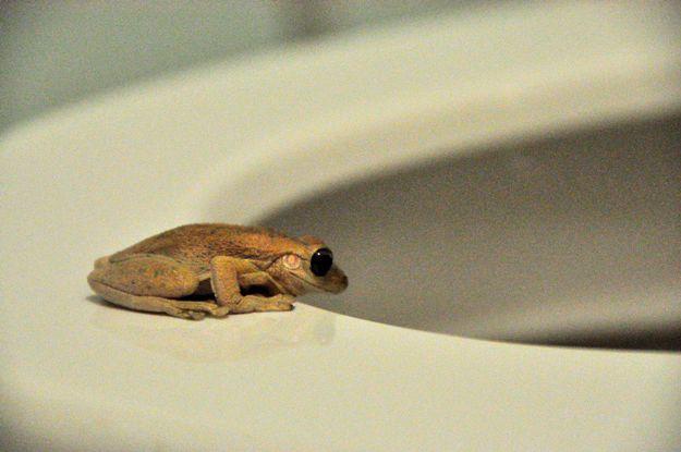 frog for blog